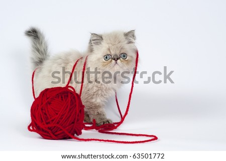 Cute little persian kitten with  red wool ball . - stock photo