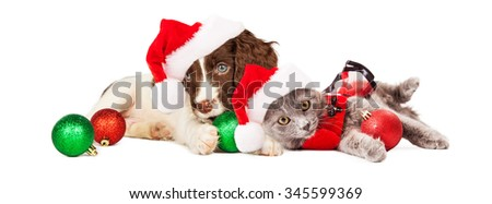Cute little puppy and kitten wearing Christmas outfits and Santa Claus hats laying together - stock photo