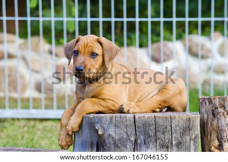 cute little puppy laying on a wooden stem outside in garden - stock photo