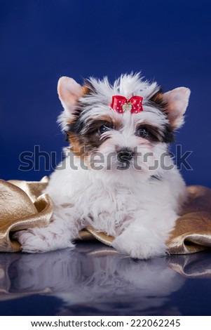 cute little puppy on a colored background