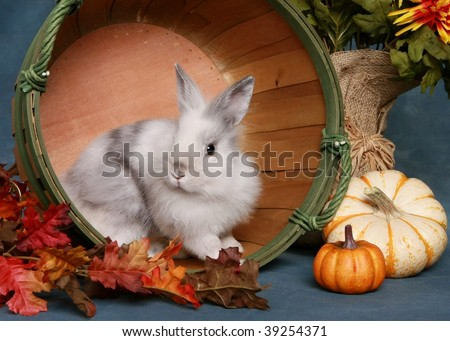 Cute little rabbit in autumn scene - stock photo
