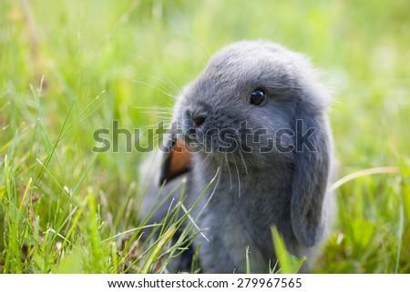 Cute little rabbit on the grass - stock photo
