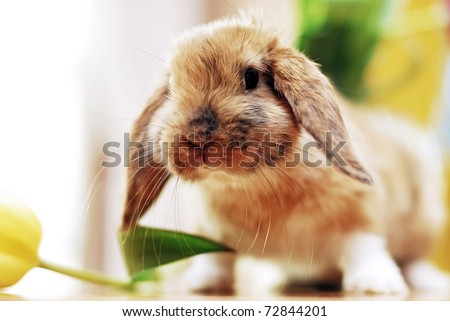 cute little rabbit with tulips - stock photo