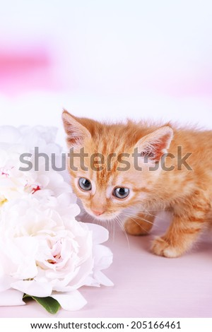 Cute little red kitten and bouquet of white flowers on light background - stock photo