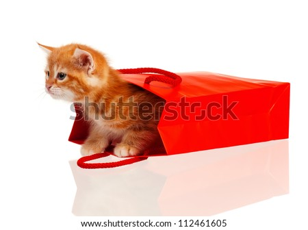 Cute little red kitten in a shopping bag isolated on white background - stock photo