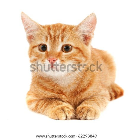 cute little red kitten isolated on white - stock photo