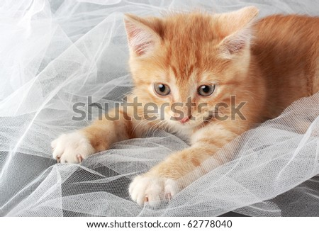 cute little red kitten playing with fabric - stock photo
