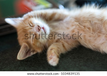 Cute little red kitten sleeping on dark background