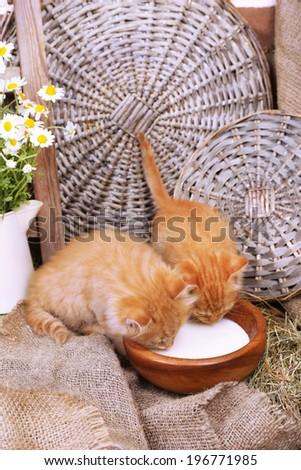 Cute little red kittens drinking milk on barn wall background - stock photo