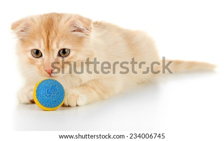 Cute little Scottish fold kitten with ball, isolated on white  - stock photo