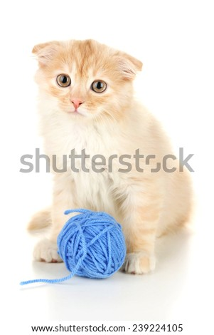 Cute little Scottish fold kitten with skein of thread, isolated on white  - stock photo