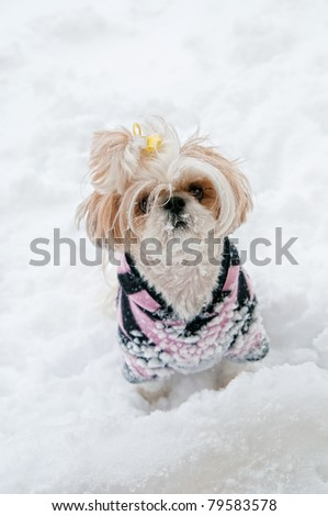 Cute little ShihTzu pup with a yellow bow in her hair and wearing a sweatshirt, standing in the deep snow with snowflakes all over her furry face in winter. - stock photo