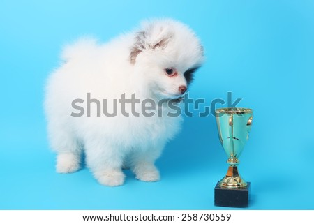 cute little spitz puppy with the winner cup - stock photo