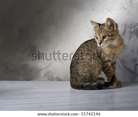 cute little striped cat on a gray bacground - stock photo