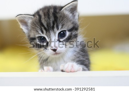 Cute little tabby kitten sitting in box. Small adorable cat. Sweet kitty pet animal. Fun baby cat photo. Gray striped kitten macro portrait. One kitty with claw paw tail. Playful pet for sale, present