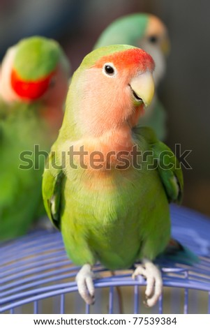Cute Love Birds - stock photo