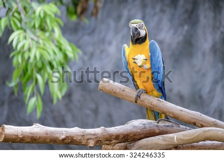 Cute macaw parrot on the perch - stock photo
