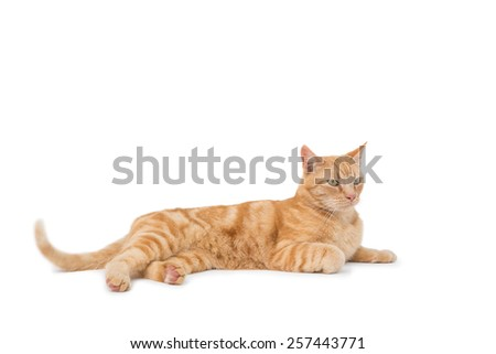 Cute maine coon lying alone on white background - stock photo