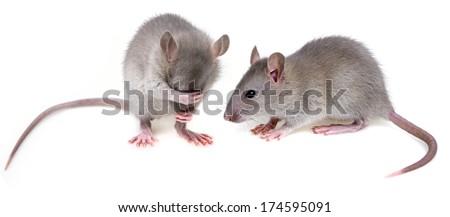 cute mice - stock photo