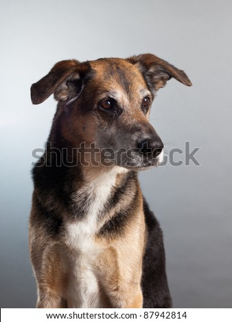 cute mixed breed dog in studio