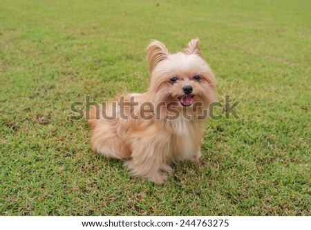 cute mixed breed dog playing in the garden - stock photo