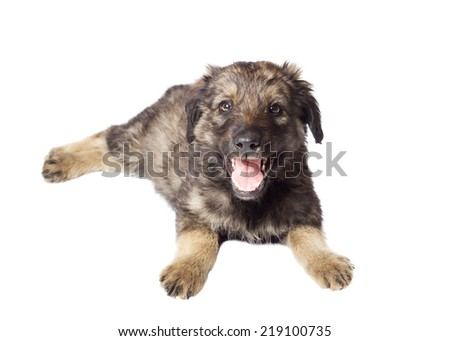 cute mongrel on a white background