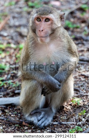Cute monkey with beautiful eyes. - stock photo