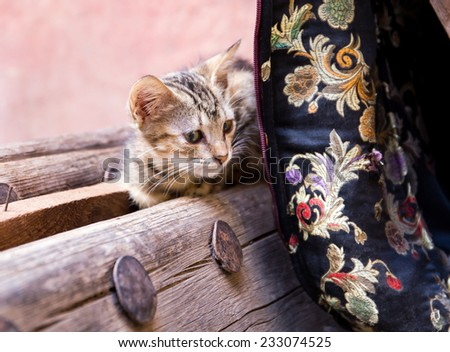 Cute moroccan kitten on a wooden bench - stock photo