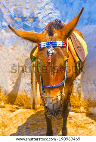 Cute mule waiting for tourists in Fira the capital of Santorini island in Greece - stock photo