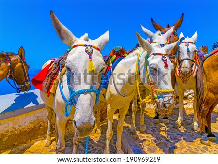 Cute mules waiting for tourists in Fira the capital of Santorini island in Greece - stock photo