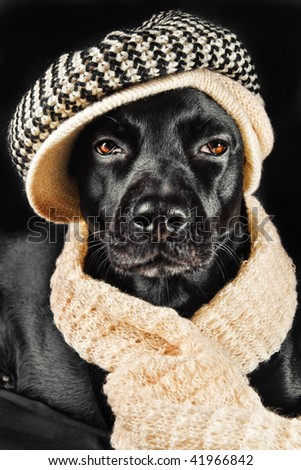 Cute mutt wearing a vintage hat and a shawl - stock photo