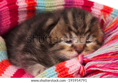 Cute neonate kitten on a warm knitted scarf close-up - stock photo