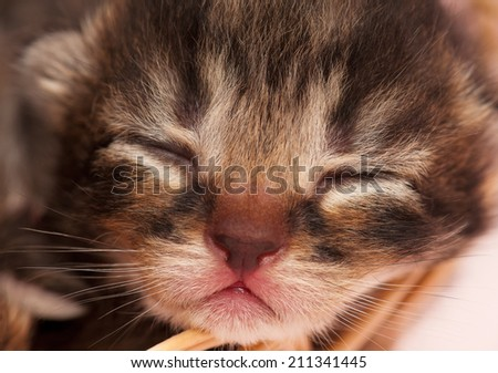 Cute neonate kitten on a warm knitted scarf close-up