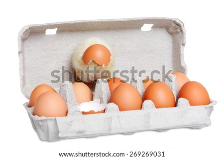 Cute newborn chick with eggs - stock photo