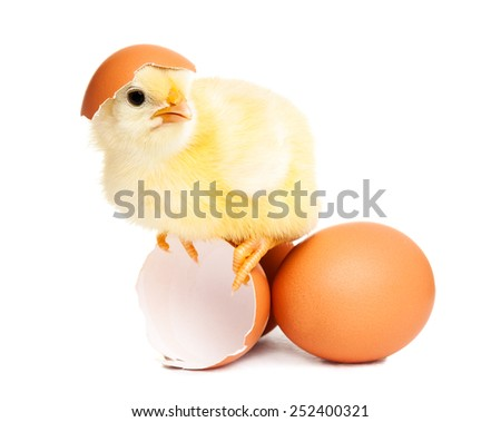 Cute newborn chicken with eggs - stock photo