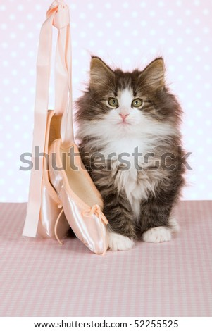 Cute Norwegian Forest Cat kitten with ballet shoes on pink background - stock photo