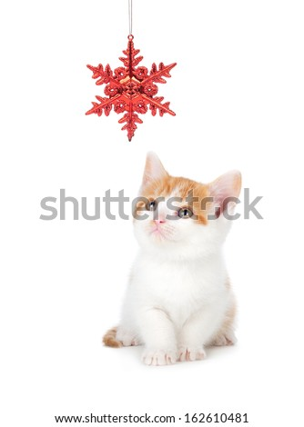 Cute orange and white kitten playing with a red Christmas snowflake ornament on a white background.