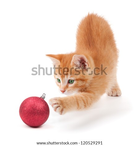 Cute orange kitten playing with a red Christmas ball ornament on a white background. - stock photo
