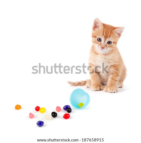 Cute orange kitten with large paws sitting next to spilled jellybeans isolated on a white background.