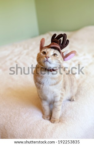 cute orange tabby cat wearing a reindeer hat and begging for food - stock photo
