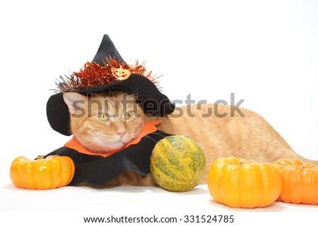 Cute orange tabby in Halloween costume  - stock photo