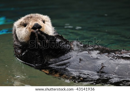 Cute otter greets visitors in traditional asian style with both hands together - stock photo