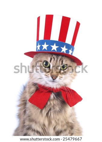 Cute patriotic cat - stock photo