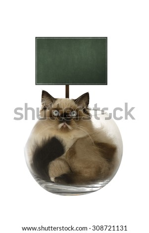 Cute persian cat inside glass bowl isolated over white background. You can put your design on the board - stock photo