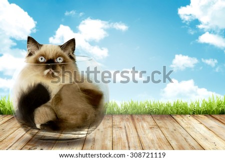 Cute persian cat inside glass bowl with blue sky background - stock photo