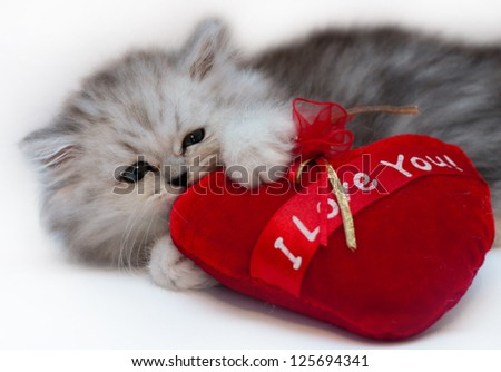 cute persian kitten holding red heart isolated on white - stock photo