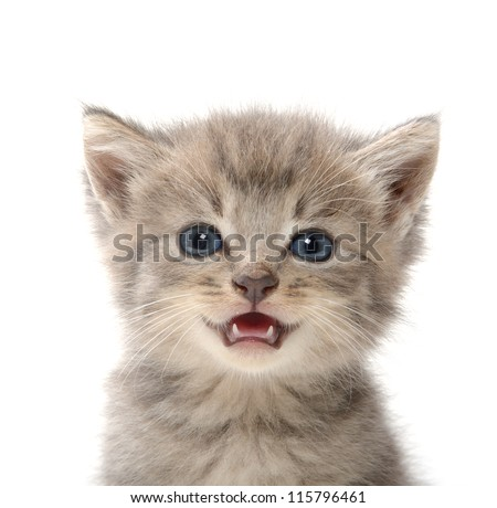 Cute pet tabby baby kitten on white background - stock photo