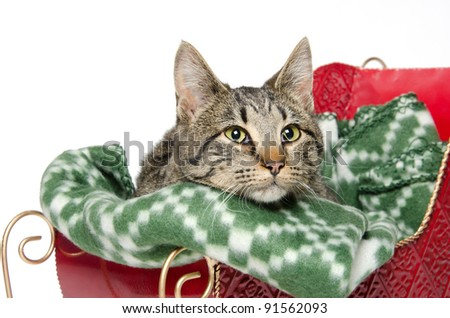 Cute pet tabby cat on green blanket in red sleigh on white background