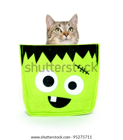 Cute pet tabby cat sitting in Halloween bag on white background - stock photo