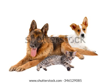 Cute pets, isolated on white - stock photo